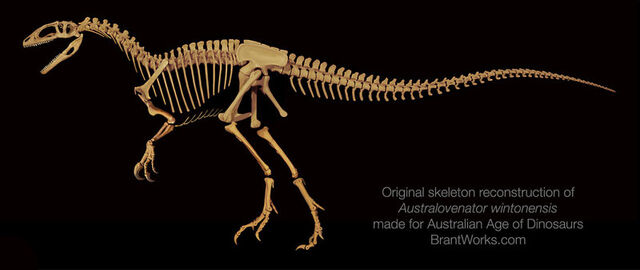 File:Australovenator skeleton.jpg