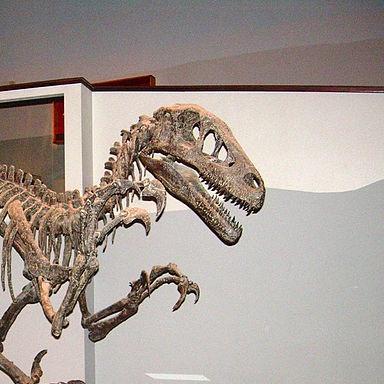 File:Utahraptor Skeleton Cropped.jpg