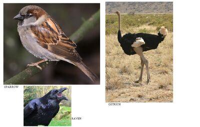 Birds Of Earth