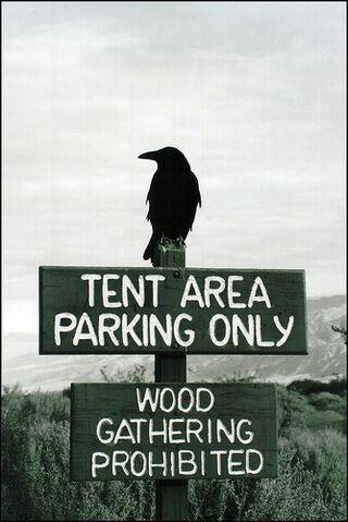 File:Raven sez- .jpg