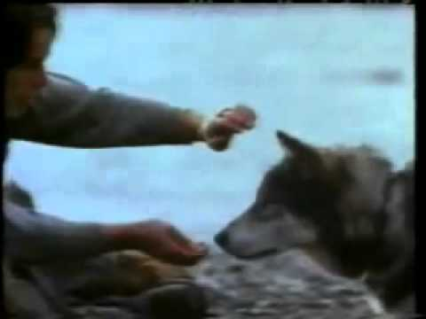 File:White Fang Theatrical Teaser Trailer.jpg