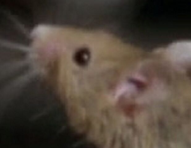 File:Mouse'sFaceInGarfield.jpg