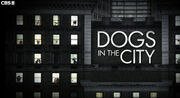 Dogs-in-the-city.jpg