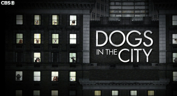 File:Dogs-in-the-city.jpg
