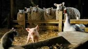 Charlotte's Web (Live-Action) Preview