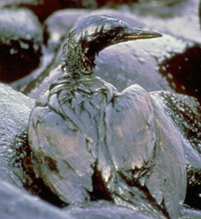 File:Bird oil.png