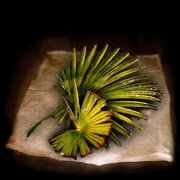 Pure leafsh