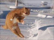 Funny-cat-66-300x225