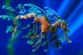 Seayappy