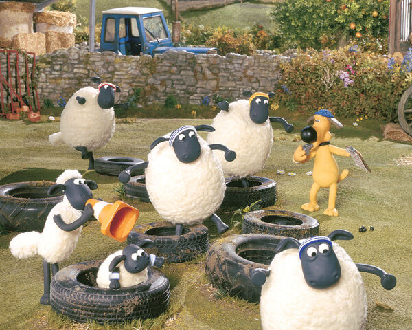 File:Sheeps and the tires.jpg