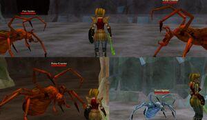 Spider sizes