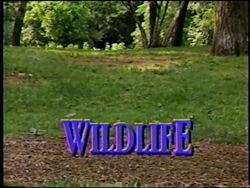 WildlifeTitleCard