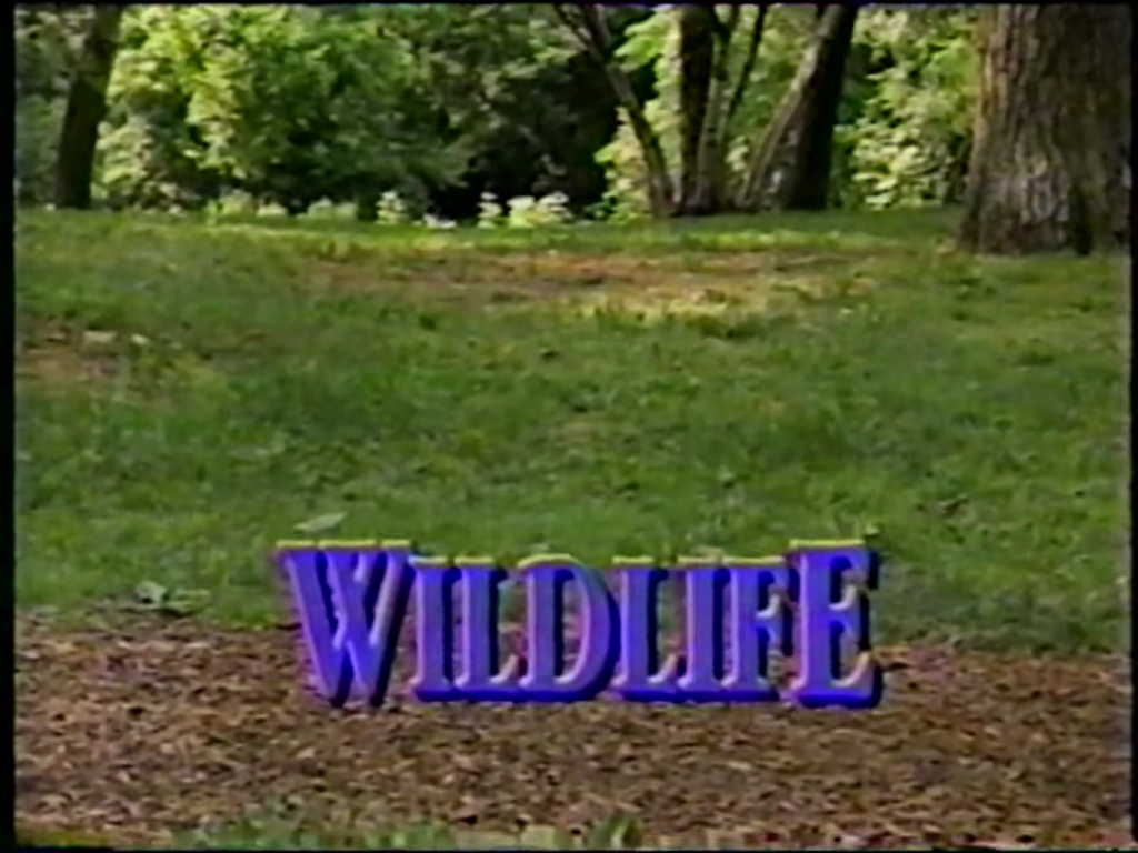 File:WildlifeTitleCard.jpg