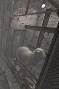 Sheep Room 02