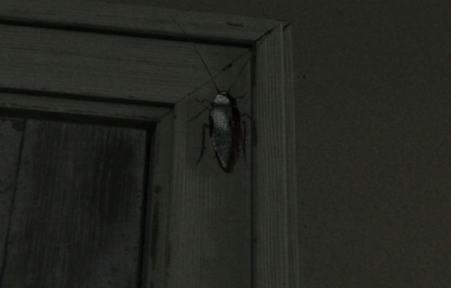File:Cockroach.png