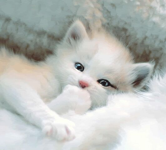 File:Cute-white-kitty.jpg
