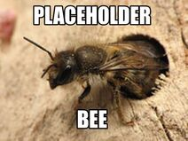 Placeholder Bee