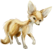 Fennec male