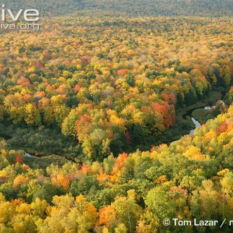 Decidious forests occupy a large portion of the East of the country..