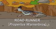 250px-Road Runner