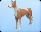 Breed-l42