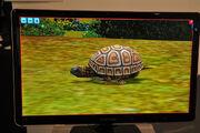 Turtle2