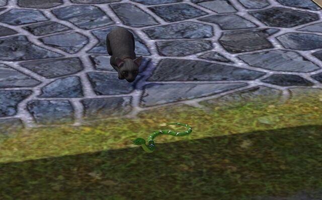 File:Cat hunting snake.jpg