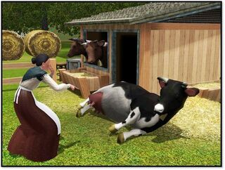 Cow store content 4