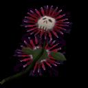 Death Flower Large