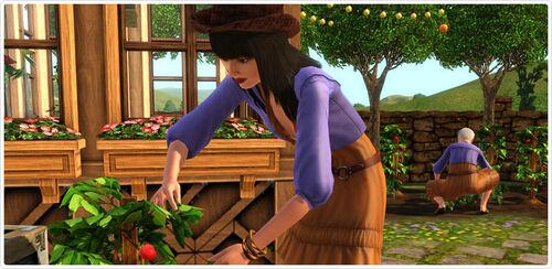Bohemian Garden screenshot 1