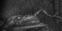Bella Amphibian