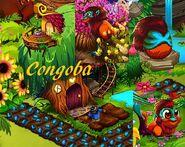 Congoba bb