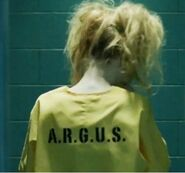 Harley-quinn-arrow-season-2-photo