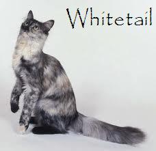 File:Whitetail.jpeg
