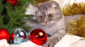 File:Christmas kitteh.jpeg