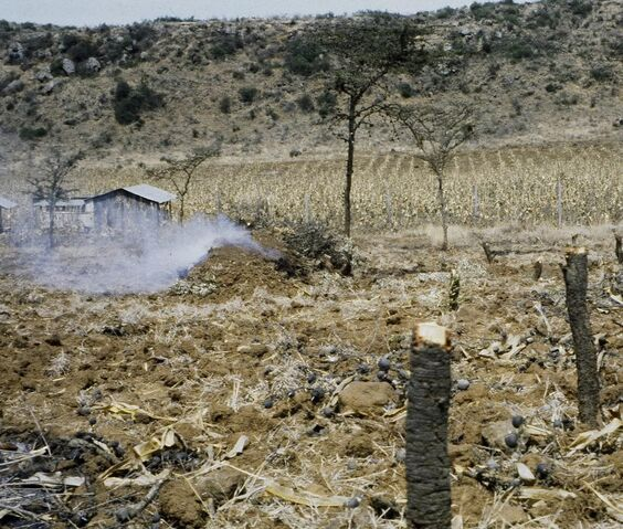 File:Charcoal production.jpg