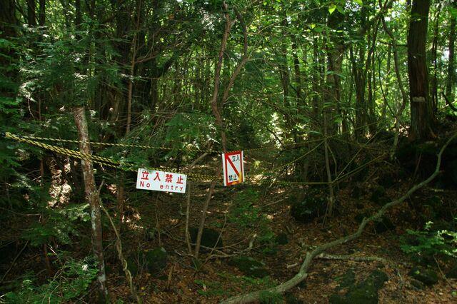 File:Aokigahara.jpg