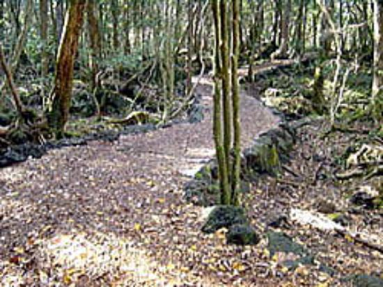 File:Aokigahara-forest-nature.jpg