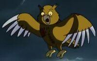 Hooter owl
