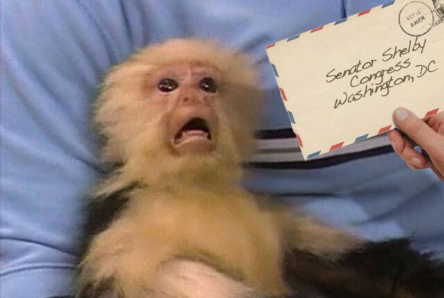 File:Scared-monkey-ricin-letter.jpg