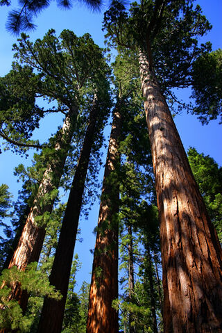 File:Sequoia-and-kings-canyon-national-parks-california-caseq.jpg