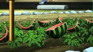 Watermelan