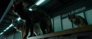 Maxim Horvath's Wolves