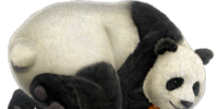 Panda head