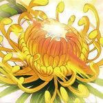 Chrysanthemum Mug