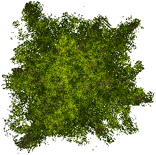 File:Spr tree All 228x226.png