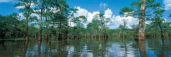 Main bengal swamp