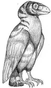 Tiger-necked flanker