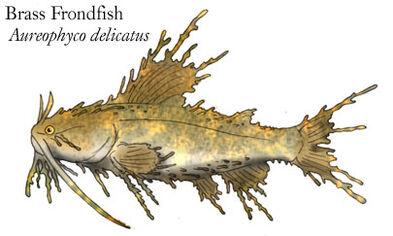 Brass frondfish