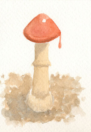 Red cap by sphenacodon